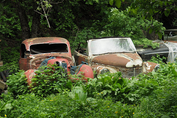 Vintage cars wait to be discovered